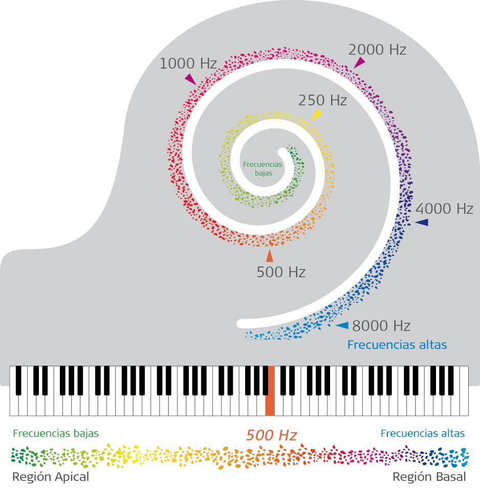 La velocidad de la audición