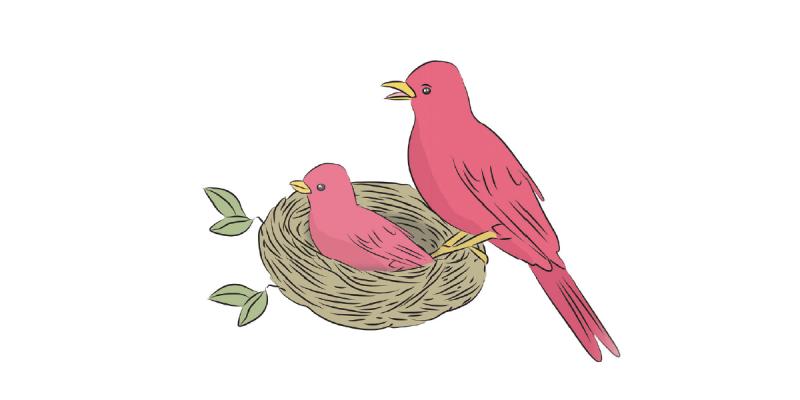 Rehabilitation Lesson Kit 13 - BirdsRehabilitation Lesson Kit 13 - Birds