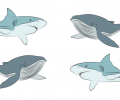 Rehabilitation Lesson Kit #17: Sharks & Whales