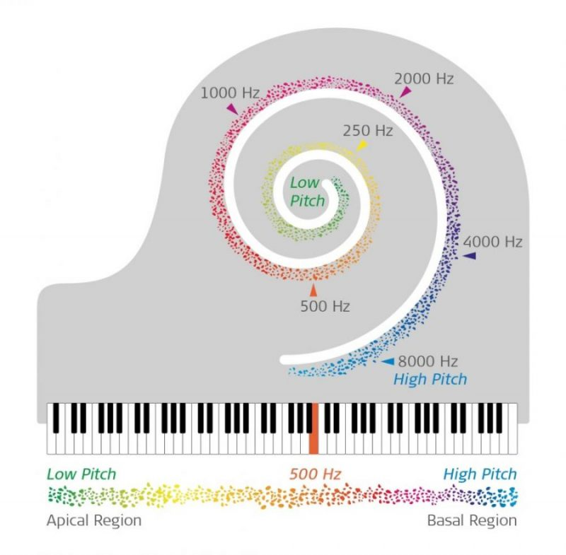 Perception of these low frequencies occurs in people with typical hearing in the apex of the cochlea.
